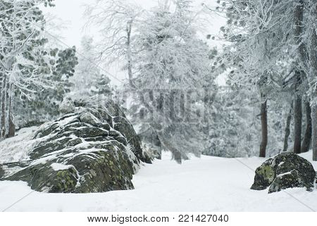 winter view from the top of the mountain in the Urals in the snowy overcast weather; in the foreground covered with hoarfrost tops of trees poster