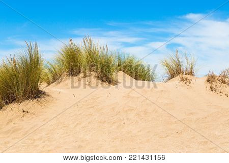 Dunes of the beach with vegetation and sky with clouds behind.