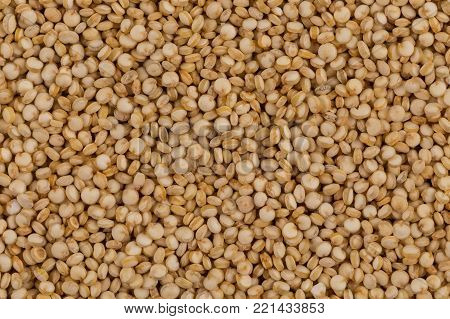 Quinoa Seeds Close Up