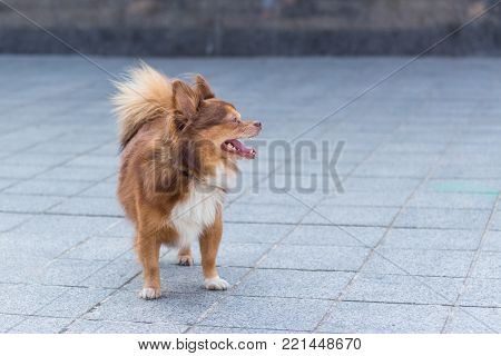 Little one dog stands on the street