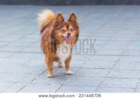 Little one dog stands on the blank street