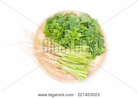 Cut the coriandrum sativum and roots in wooden plate isolated on white background.Coriandrum sativum is an important spice for Thai cooking