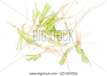 Close up Coriandrum sativum roots isolated on white background. Coriandrum sativum roots is an important spice for Thai cooking.