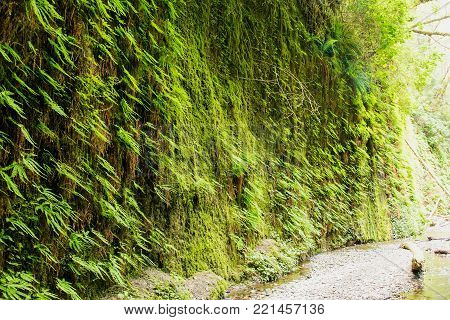 Fern Canyon at the Prairie Creek Redwoods State Park in Northern California, USA