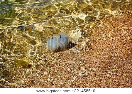 Background of sea pebbles in water and jellyfish. Texture of the seabed at the surf line.