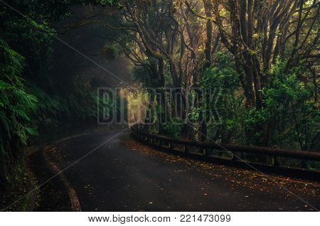 Road in magic misty forest of Anaga Rural Park, Tenerife, Canary Islands, Spain