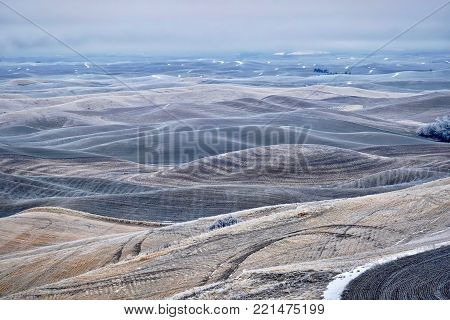 Rolling hills covered with frost and snow in winter. Foggy morning soft light on the farmlands in agricultural Palouse, southeast Washington.
