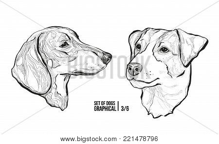 Set of portraits of dogs. Breeds Dachshund and Jack Russell Terrier. Graphical vector illustration