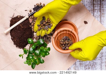 Transplanting houseplants Kalanchoe illustration of procedures and tools for caring for indoor plants. Soil preparation, the first layer - expanded clay