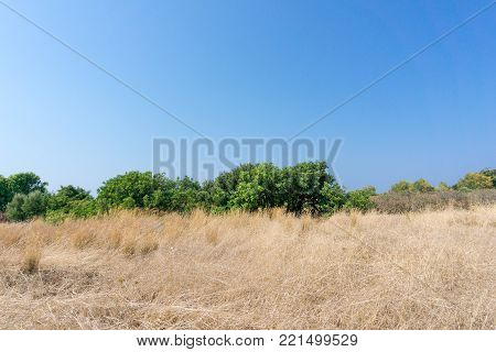 View to a dried Field with Cerals and green tropical Trees in Summer. Close-up of big Field, green tropical Trees and Mountains in the Background. Landscape and Nature Backgrounds.