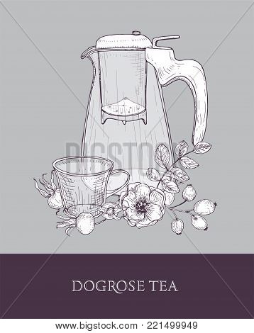 Elegant drawing of transparent pitcher with strainer, cup of tea and dog rose flowers, leaves and hips or berries on gray background. Tasty and healthy drink. Hand drawn vector illustration