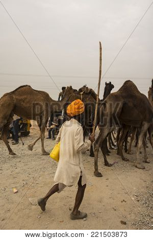 PUSHKAR, INDIA-October, 31, 2014 : unidentified native person in camel caravan in Pushkar.