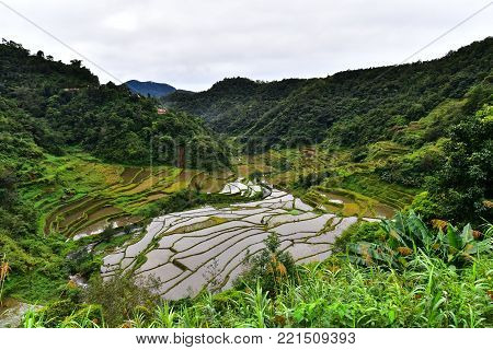 Beautiful Rice Terraces - Batad, Philippines UNESCO heritage