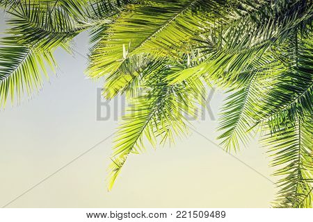 Beautiful Toned sunlight Palm leaves background with copy space Holy Week Easter concept Long weekend spring break
