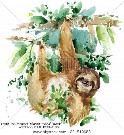 Watercolor sloth illustration. tropical animal. Tropical animal
