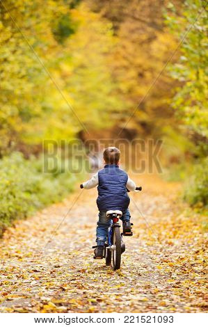 Cute little boy outside in a park on a sunny day, cycling outside in autumn nature. Rear view.