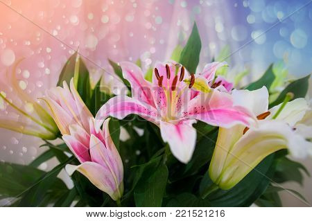 Pink Lilly In The Garden And Tone Color Pink,lilly Flowers (shallow Dof) Natural