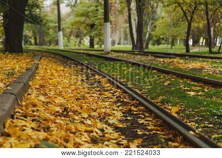 Railway Or Tramway Track Near Beautiful Autumn Warm Dry City Park, Bright Warm Fall Colors, Yellow L