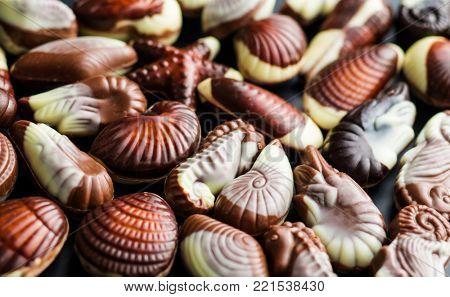Sweet chocolate seashells. Chocolate truffles.