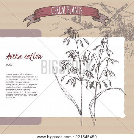 Common oats aka Avena sativa sketch with field landscape. Cereal plants collection. Great for bakery, agriculture, farming design.