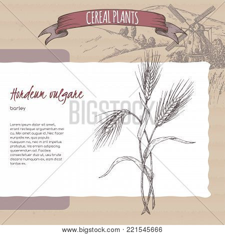 Barley aka Hordeum vulgare sketch with field landscape. Cereal plants collection. Great for bakery, agriculture, farming design.