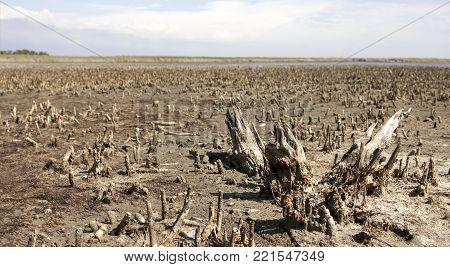Dry plants and soil - global warming and pollution concept