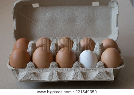 eleven brown chicken eggs and one white egg in a cardboard container