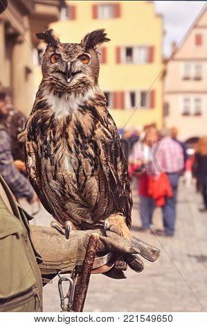 european eagle owl sitting on handler's hand
