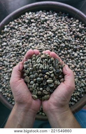 Coffee beans in caucasia woman hands. Vertical orientation