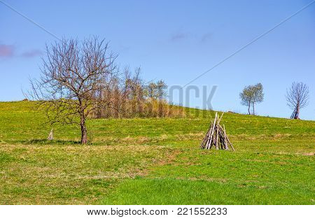 tree on the grassy hillside. springtime in rural area