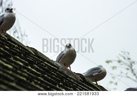 Seagulls sitting on the roof of the bridge over river Pegnitz in Nuremberg, Germany