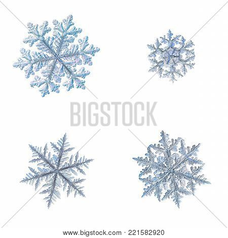 Four snowflakes isolated on white background. Macro photo of real snow crystals: complex stellar dendrites with elegant shapes, perfect hexagonal symmetry, long ornate arms and glossy relief surface.