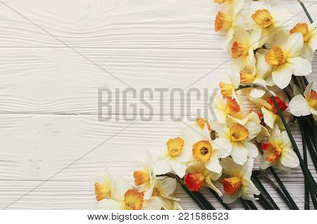 beautiful daffodils border on white wooden rustic background top view. space for text. bright spring flat lay. hello spring and happy mothers day. greeting card mock-up