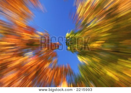 Autumn Zoom