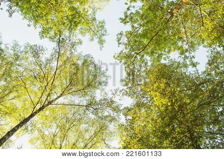 Wild nature concept. Tree tops are illuminated by the setting sun in forest. Summer time nature. Dark nature forest. Green spring nature. Nature background. Wild nature