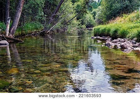 Crystal clear river with a serene water surface. The stones on the bottom transparent quiet of the forest river. The view from the side at water level.