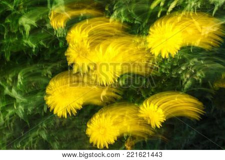 Abstract texture and background. Blurred photo of flowers with movement and streak effect in yellow and green colors.  Directional blur, motion effect.