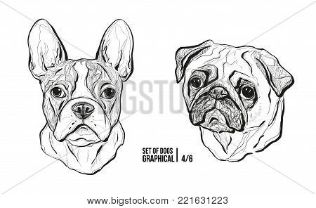 Set of portraits of dogs. Breeds French Bulldog and Pug. Graphical vector illustration