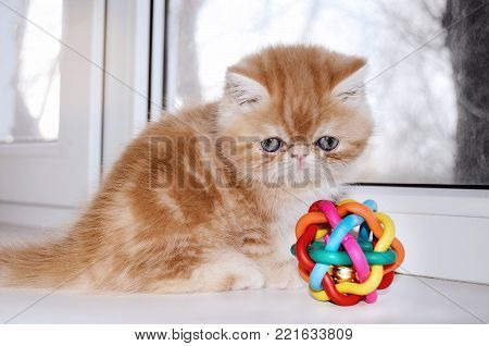 Small the thoroughbred red kitten sits at a white window and looks at a ball. Without people. Indoors. Horizontal format. Color. Photo.