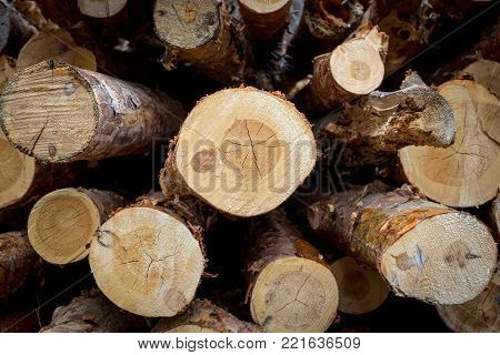 Cut pine. Logging. Annual rings on the cut pine. Logs saw. Sawmill. Cut pine. Logging. Wall, log, wood