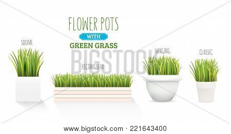 Fresh green grass in a square pot. A set with several forms of pots. Element of home decor. The symbol of growth and ecology. Vector realistic illustration, isolated.
