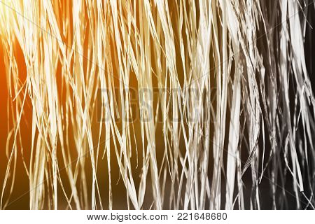 Black and white dry grass (reed) background in vintage concept with golden glow from the sun