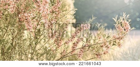 Pink flowering spring blossom, green lawn background. Beautiful pink spring tender cherry or almond flowers blossom. Pink sharp and defocused flowers blooming tree, sun backlit.