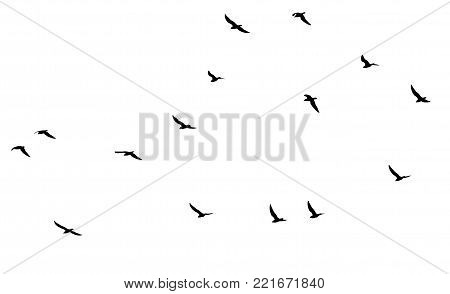 a flock of birds on a white background .