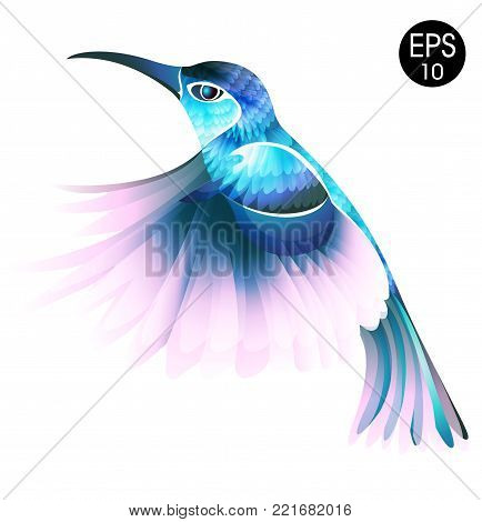 Colibri Bird. Bright vector illustration of exotic flying humming bird isolated on white background for your design