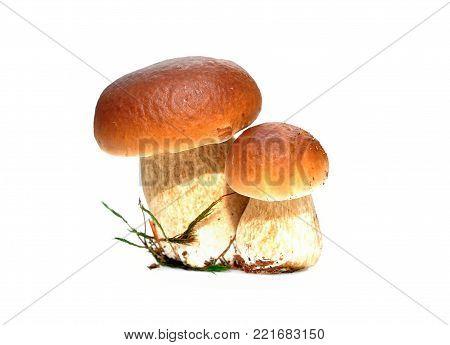 Pair of Boletus edulis mushroom isolated on white background
