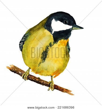 Watercolor Image Of Tomtit