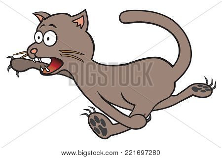 A frightened wide eyed cat is fleeing from danger