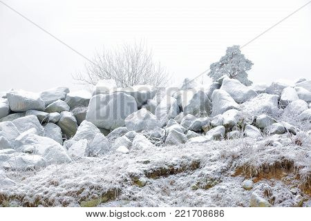 Big frosty rocks and green frosty trees on background. Beautiful nature backgrounds. Amazing winter view