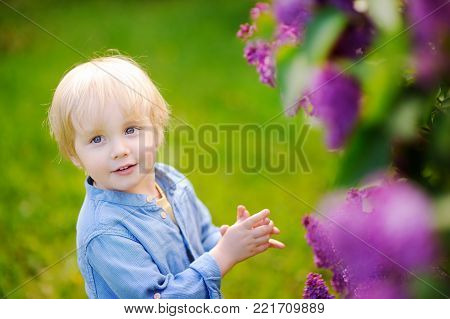 Cute little blonde hair boy enjoy blooming lilac in the domestic garden in warm day. Seasonal kid allergy/atopy